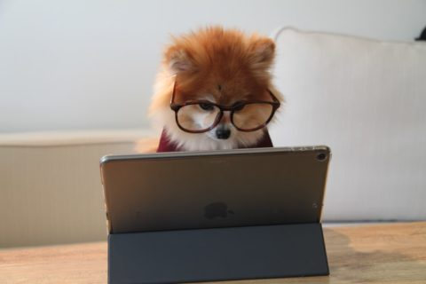 ブログ書けない続かない初心者の対処法【プロ意識を持つ】